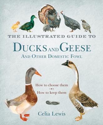 The Illustrated Guide to Ducks and Geese and Other Domestic Fowl By Lewis, Celia